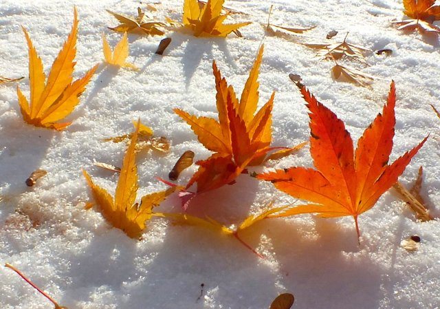 0005-Leaves.jpg