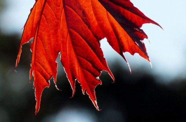 0256-LeafEdge.jpg