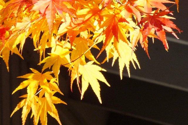 0794-Leaves1.jpg
