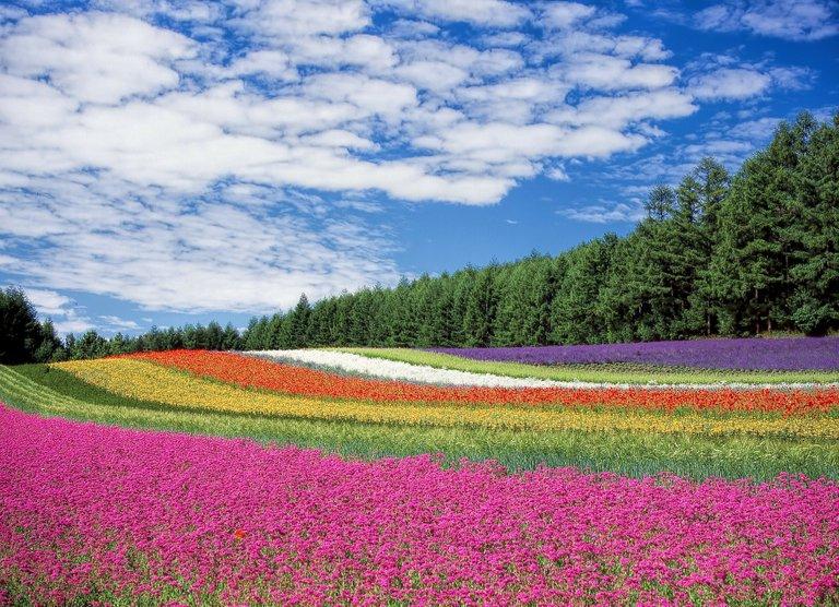 flower-field-250016_1920-2.jpg