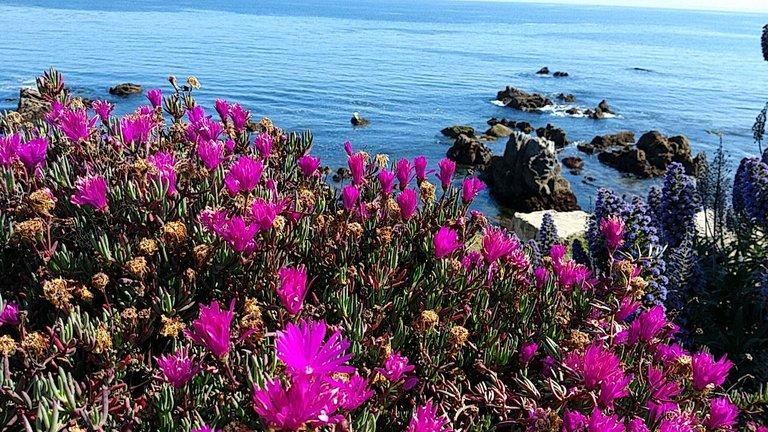 monterey flowers.jpg