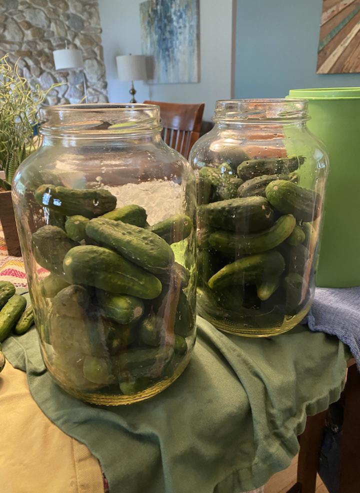 Jars full of pickle cucumbers