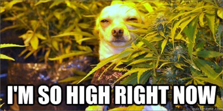 no-higher-so-high.jpg
