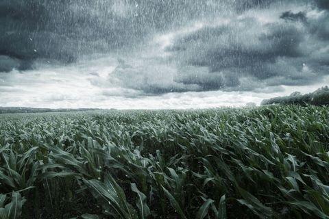 rain farm.jpg