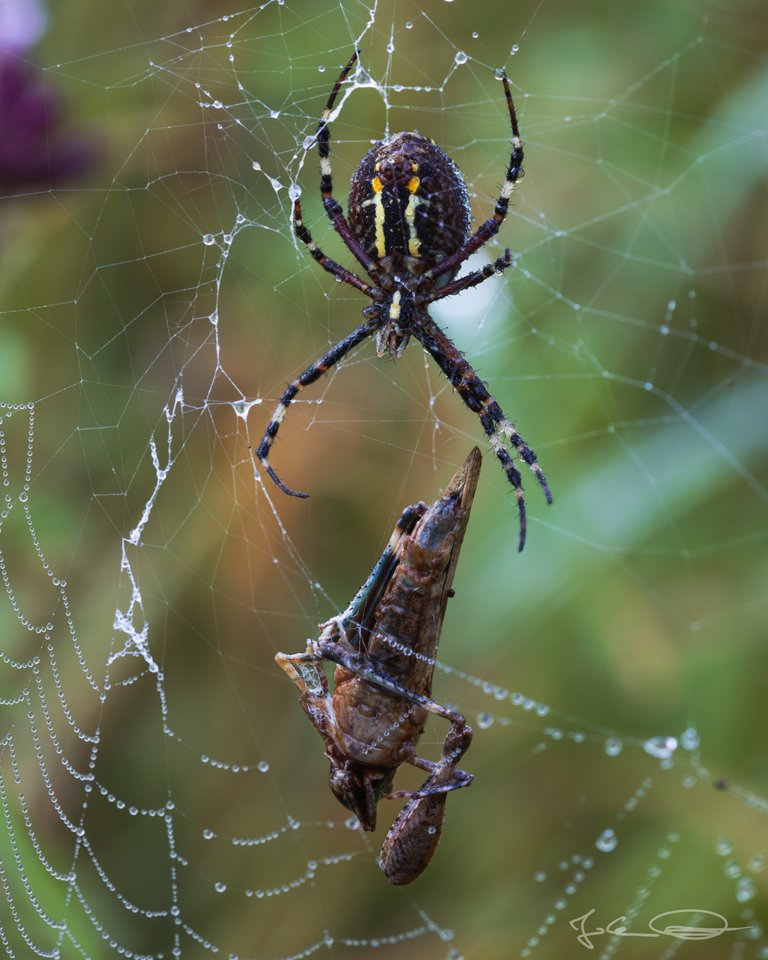 Hive AlphabetHunt Wasp Spider