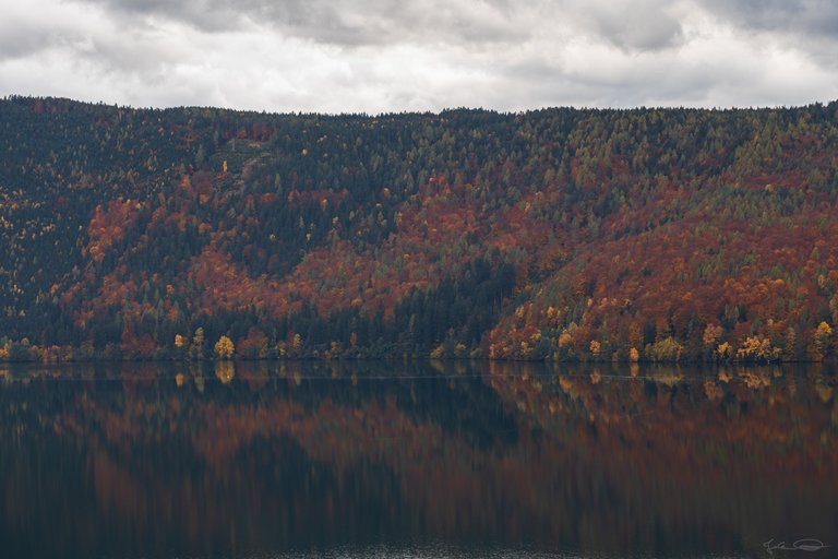 Colorful Forest at the Lake Millstatt