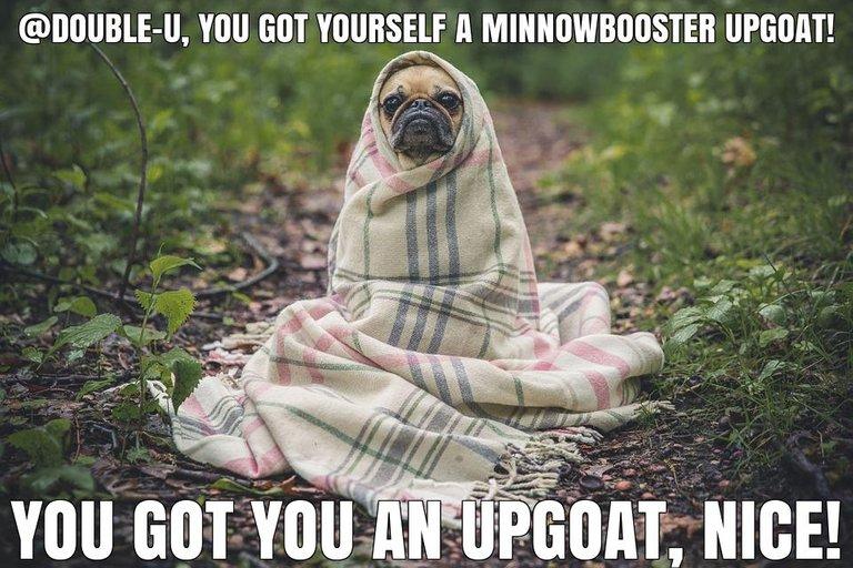 @double-u got you a $1.27 @minnowbooster upgoat, nice!