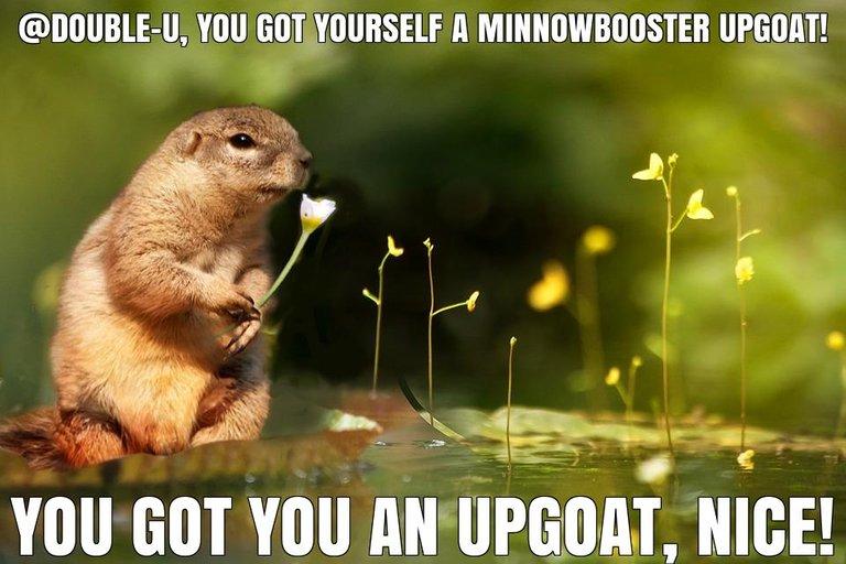 @double-u got you a $1.53 @minnowbooster upgoat, nice!