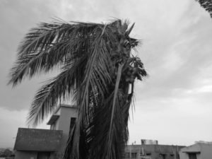 Our coconut tree after the cycloneOur coconut tree after the cyclone