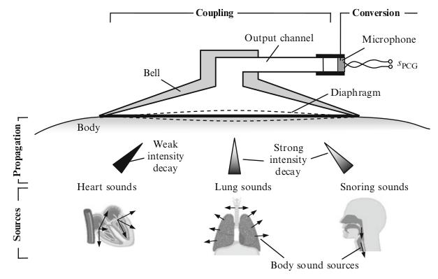 Illustration of biosignal propagation