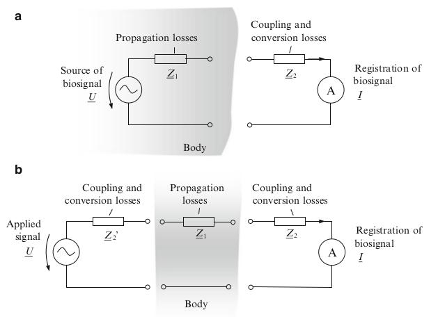 Mathematical model of biosignal propagation