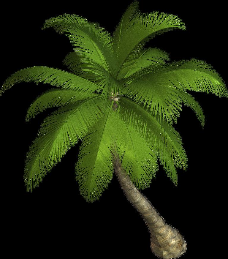 Palm Tree  800x908.png