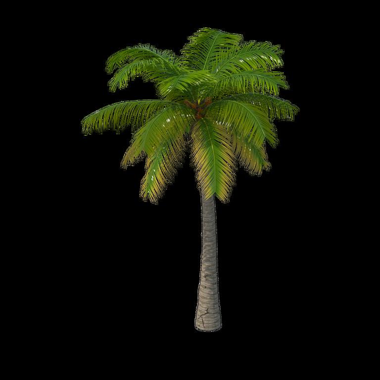 Palm Tree  960x960.png
