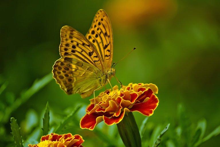 butterfly1829404.jpg