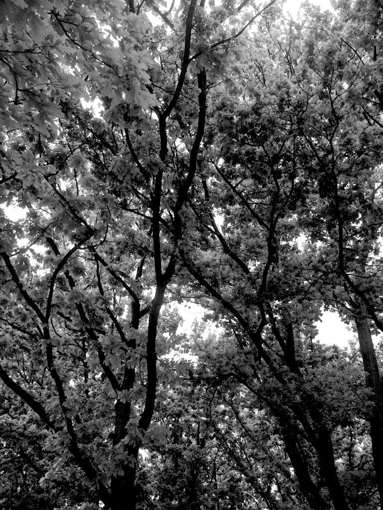 monomad trees.jpg