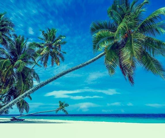 palmtrees1815272__480.jpg