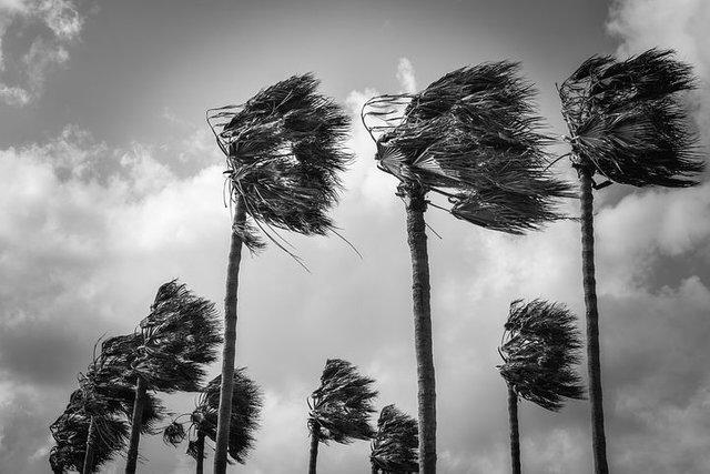 palmtrees4069748__480.jpg