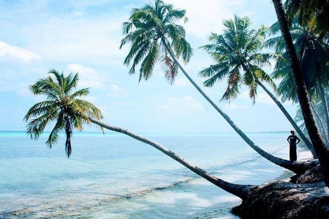 palmtrees2058191__480.jpg