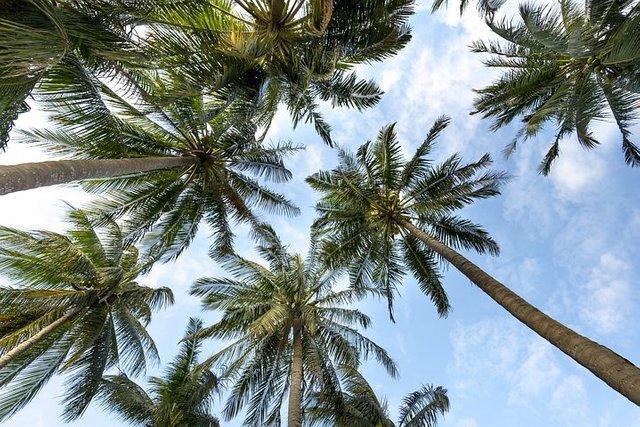 palmtrees3058728__480.jpg
