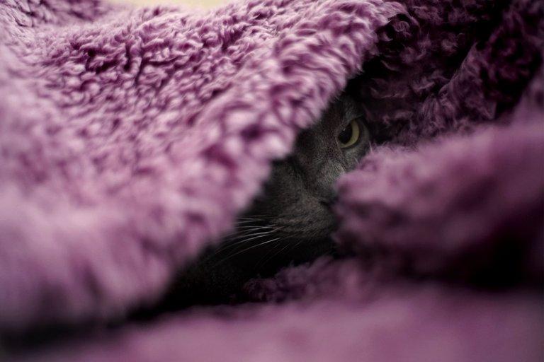 Suzi purple blanket 1.jpg