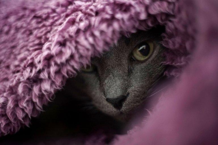 Suzi purple blanket 7.jpg