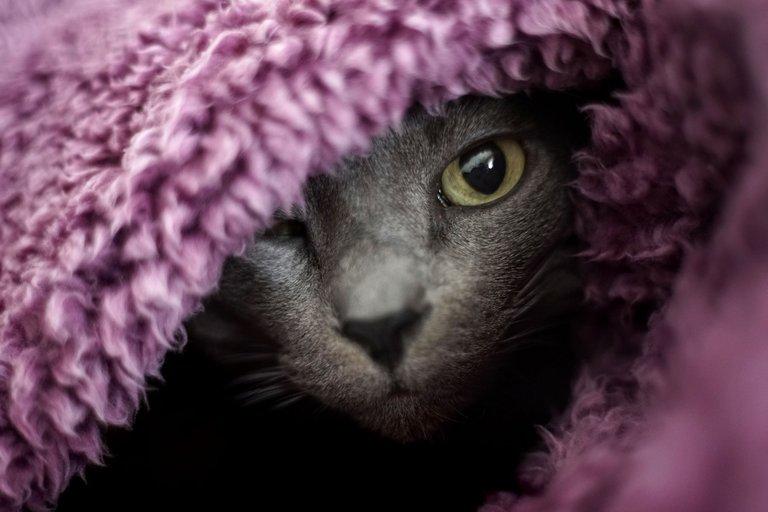 Suzi purple blanket 4.jpg