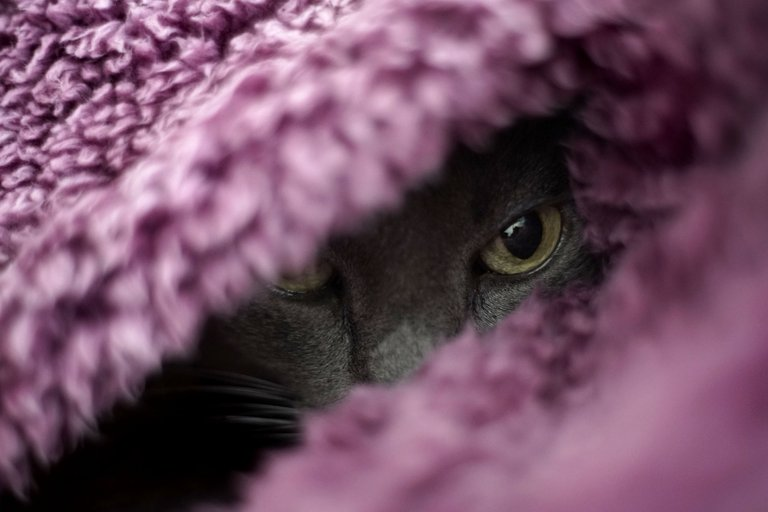 Suzi purple blanket 3.jpg