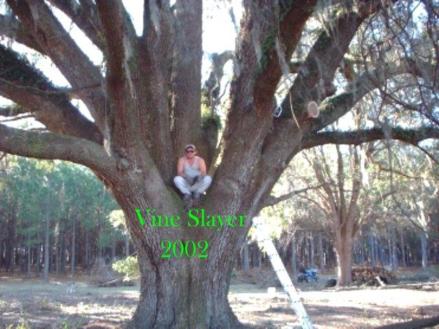 1 Tree climber.JPG