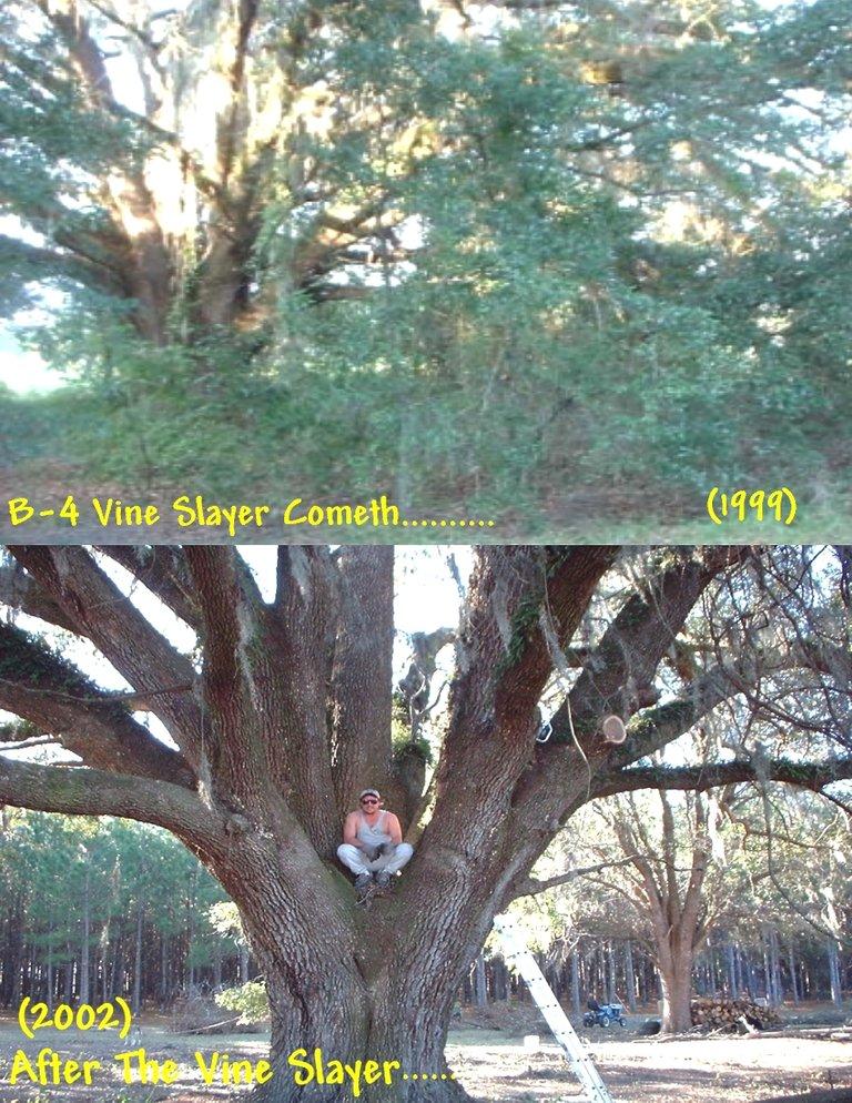 1Proud Of Tree.jpg