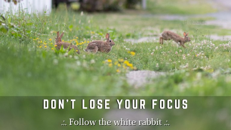 Dont Lose Your Focus.jpg