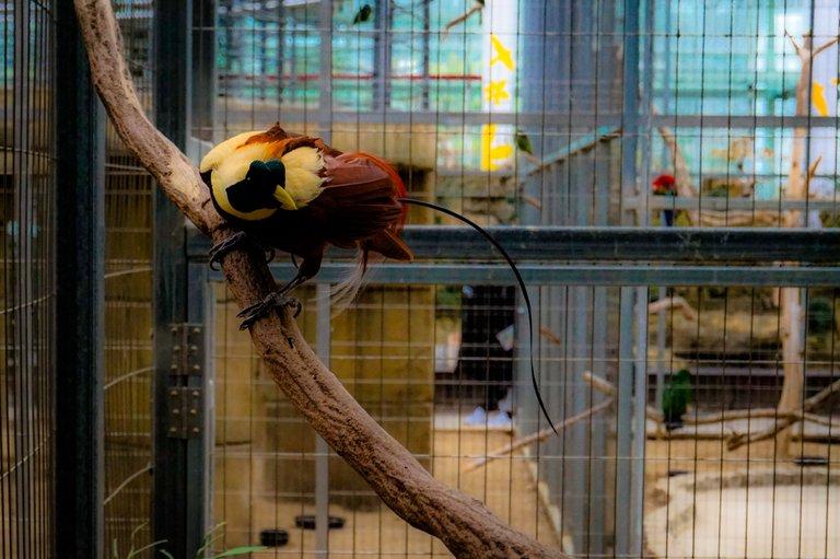 BirdPark 1.JPG