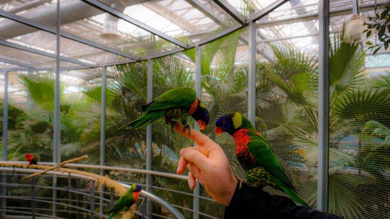 BirdPark 3.JPG