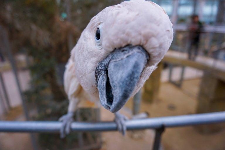 BirdPark 5.JPG