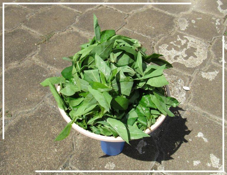 Cassava Washed.jpg