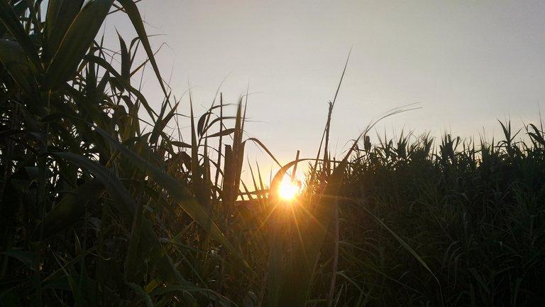 suns9.jpg
