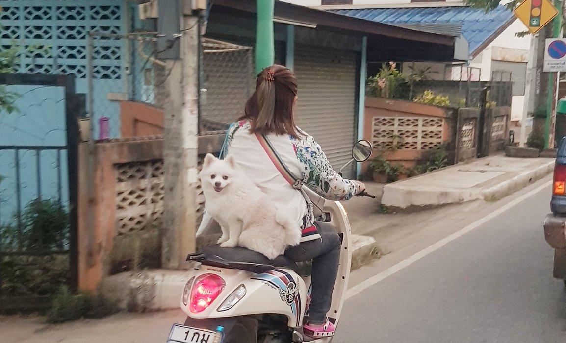 Even Pets Take it Easy