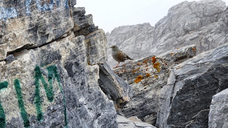 This birds have a rest 2.900 meters high