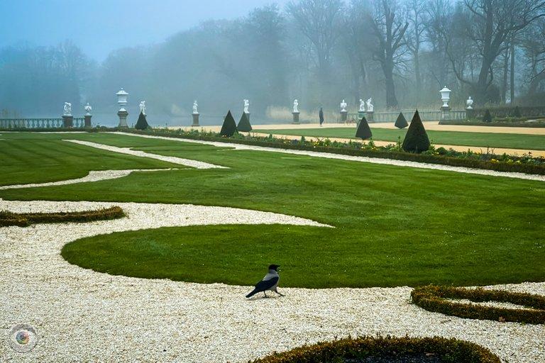 Palace Garden Crow