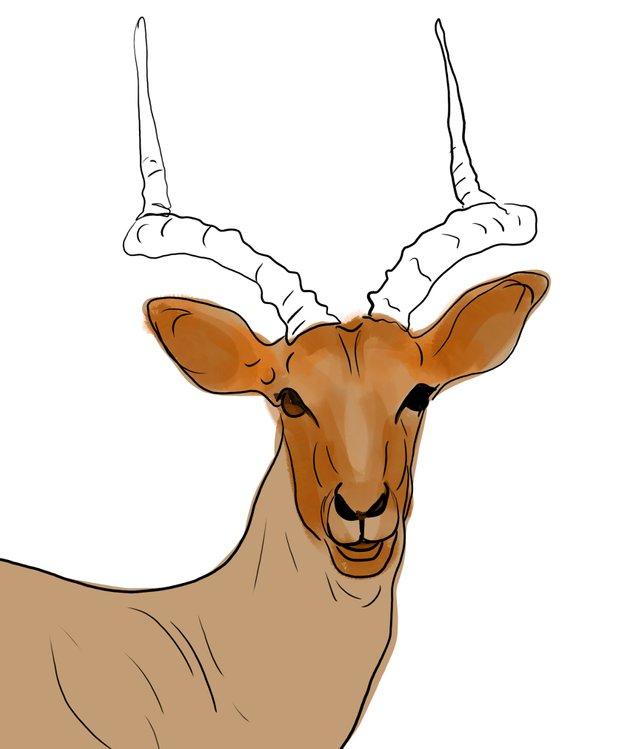 deer (460).jpg