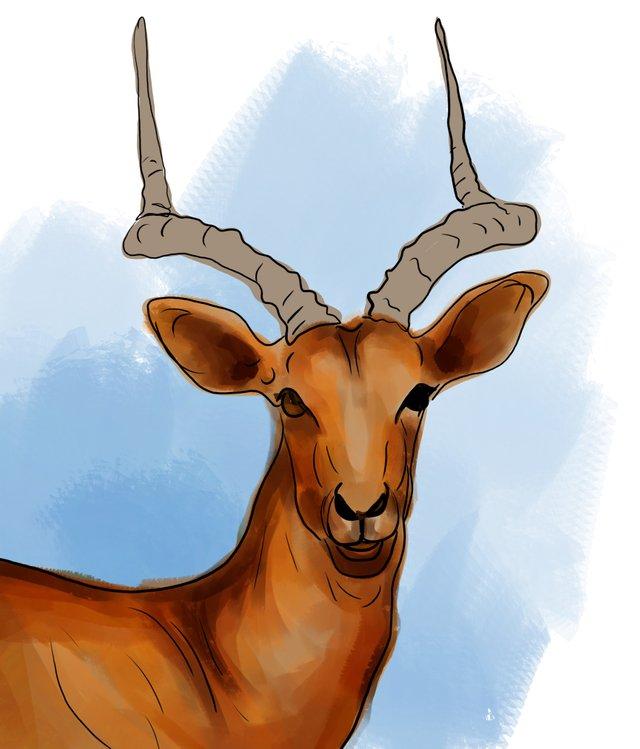 deer (465).jpg