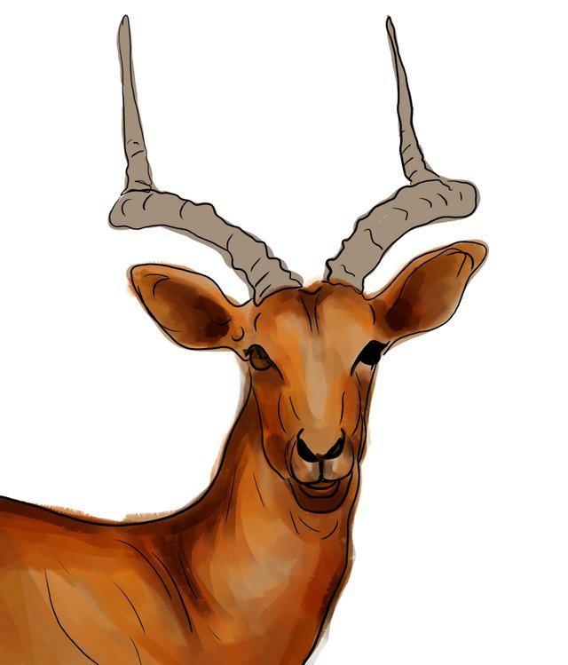 deer (464).jpg