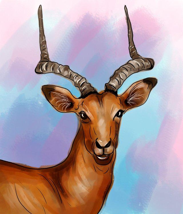 deer (467).jpg