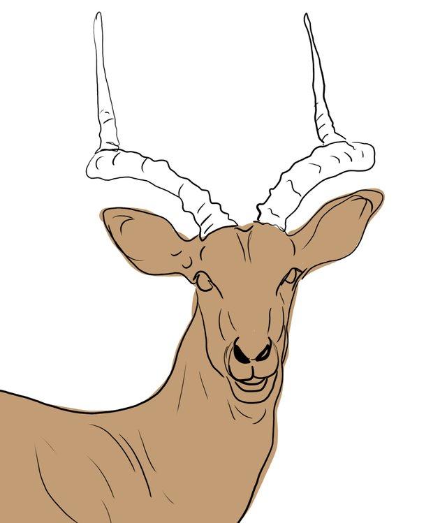 deer (459).jpg