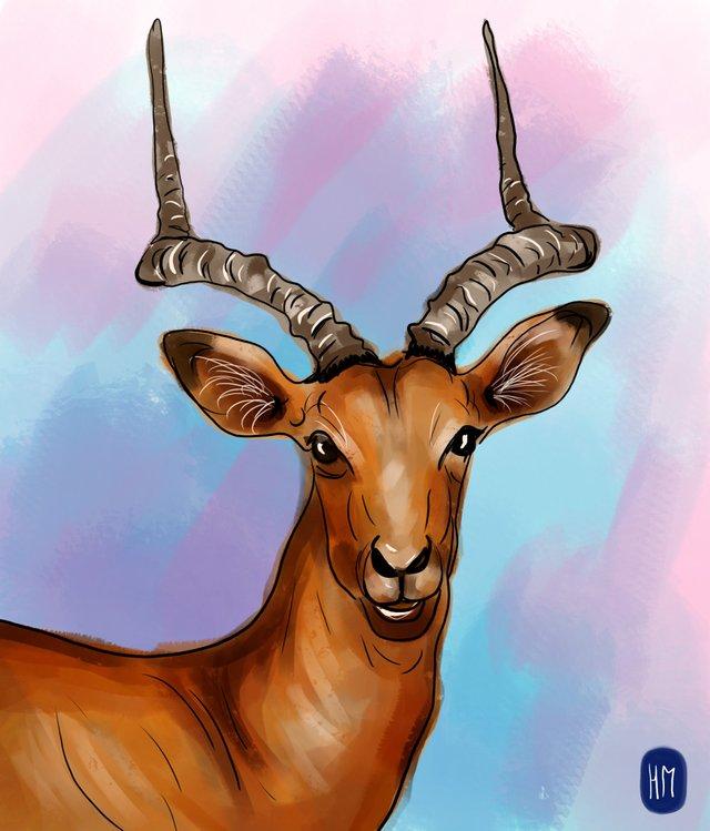 deer (456).jpg