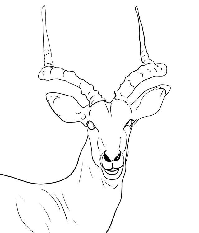 deer (468).jpg
