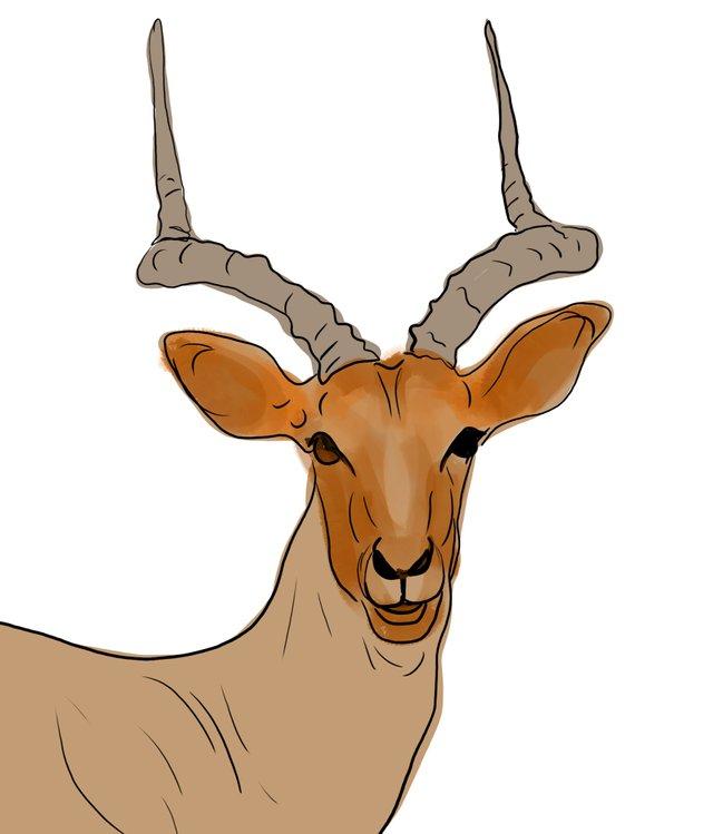 deer (461).jpg
