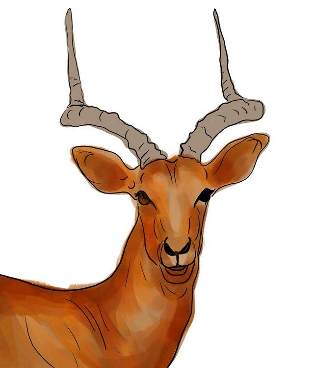 deer (463).jpg