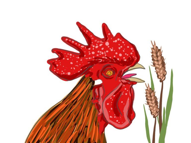 rooster(698).jpg