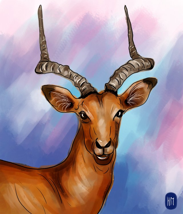 deer (457).jpg