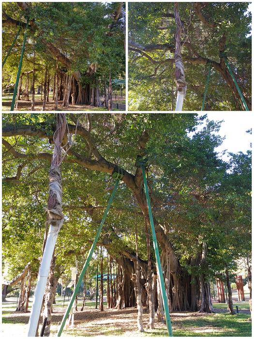 Tree Graft.png
